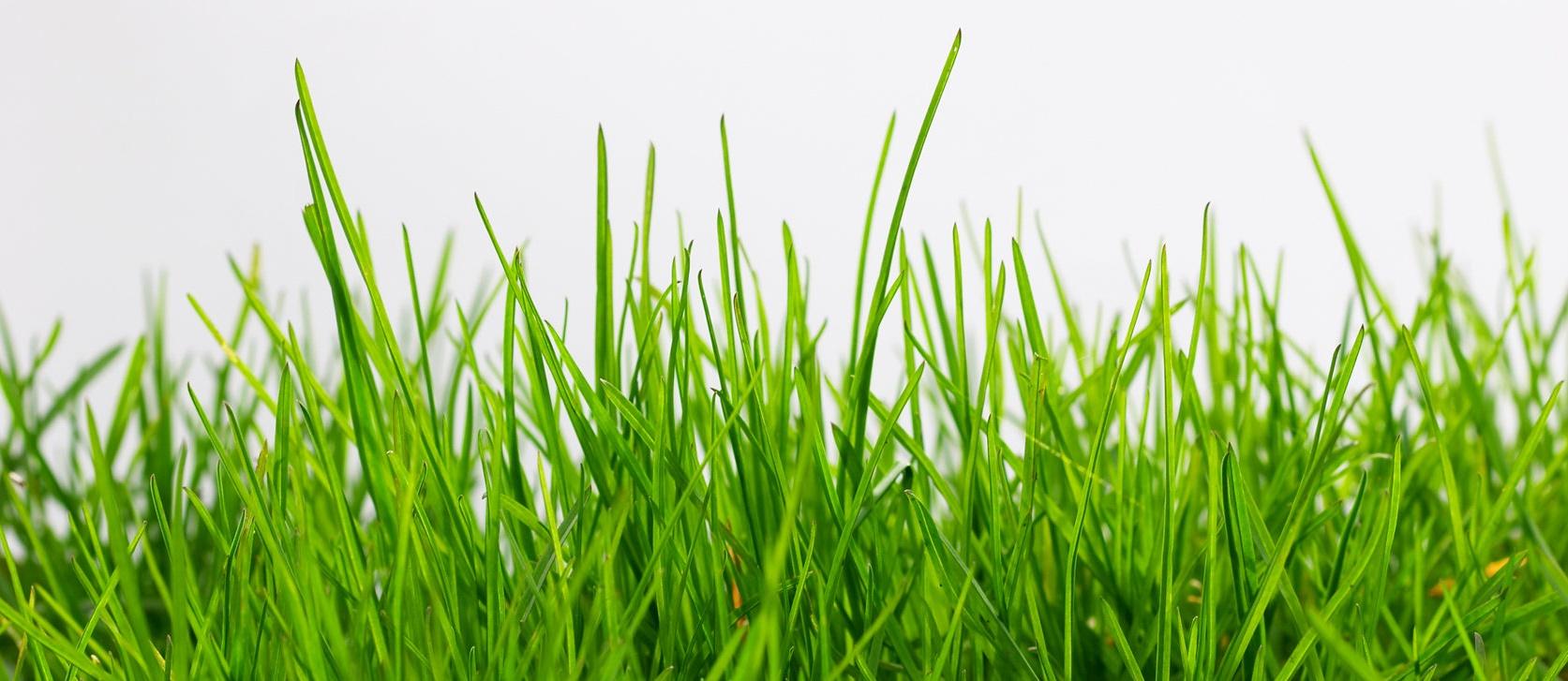 Тревен чим и тревни смеси