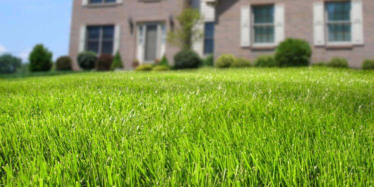 Поддръжка на тревен килим