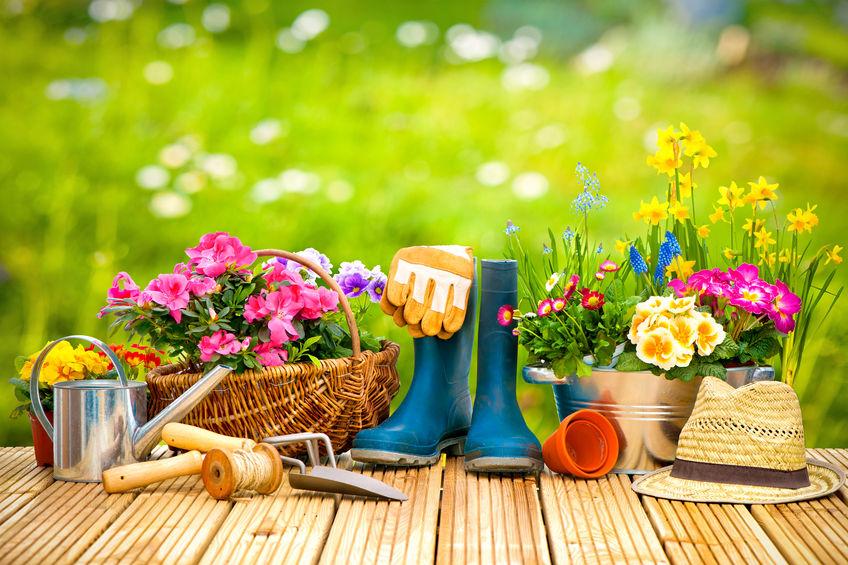 Поддръжка на декоративна растителност