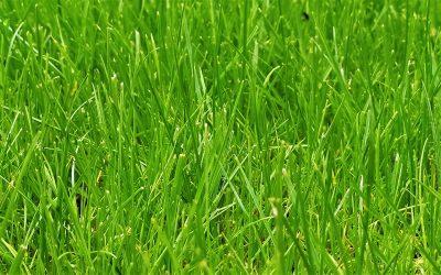 Поддръжка на тревния килим